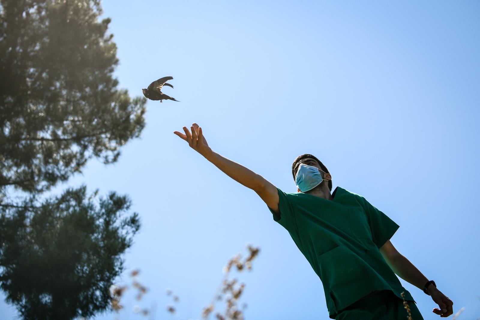 Associação CERV liberta um pássaro em gouveia